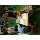 bancos mesa de pallet em Campinas